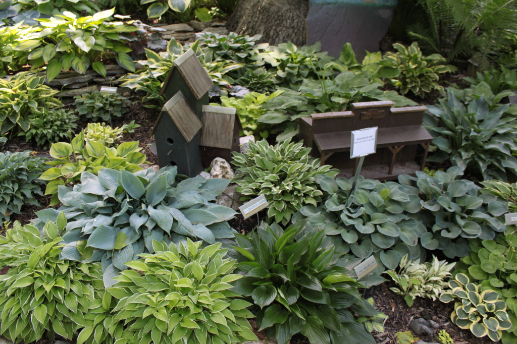 The Hosta Hideway Our Gardens